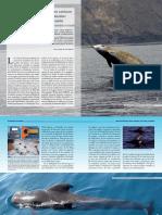 Nuevos Descubrimientos Sobre Cetaceos De Buceo Profundo