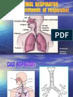 0sistemul Respirator
