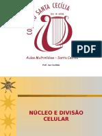 Nucleo e Divisao Celular Ppt