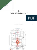 4.Ciclo-Ac.Citrico
