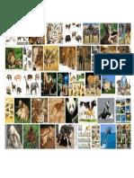 animales (2).docx