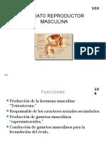 Aparatos Reproductores Femenino y Masculino, Metodos Anticonceptivos