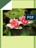 Manual Practico de Flores de Bach - Malena Lede