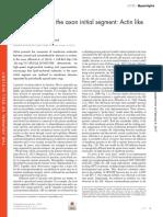 Organization of the Axon Initial Segment
