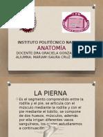 Anatomía (Pierna)