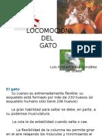 Locomocion Del Gato