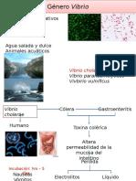 Bacterias y Virus (St)