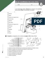Ficha 9 Microscópio