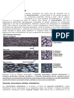 Tessuto muscolare medicina