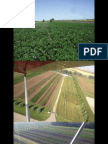 Cover Crops in Vegetable Rotations 2
