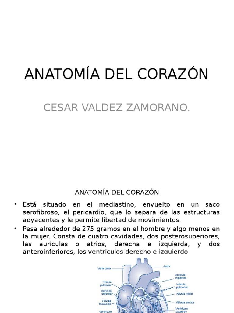 Anatomia de Corazon y Exploracion Cesar v.z