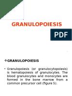 Lecture2-Granulopoiesis