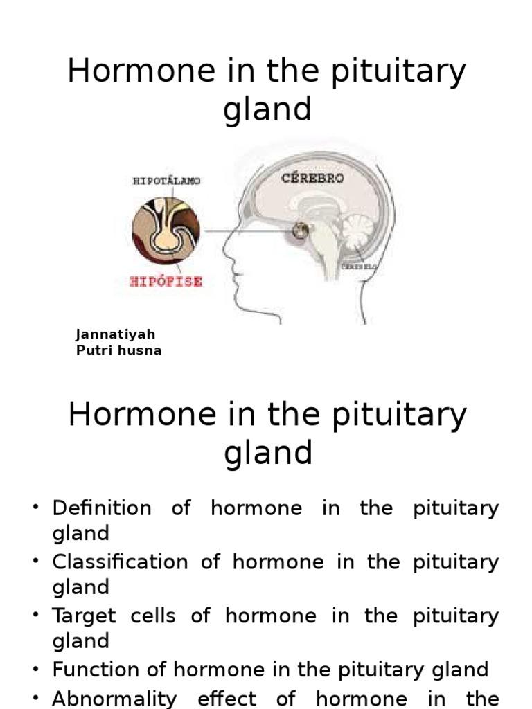 Hormone In Pituitary Gland Adrenocorticotropic Hormone