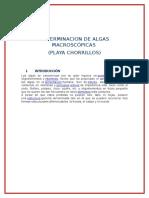 Determinacion de Algas Macroscópicas