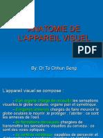 Anatomie de l'Appareil Visuel