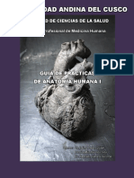 Guia de Practicas de Anatomia I - Torax