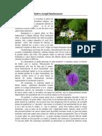 Aromoterapie - Stimulente Olfactive, Terapii Binefacatoare by LEIDA