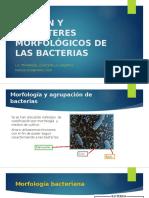 Tinción y Caracteres Morfológicos de Las Bacterias