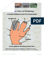 More on Morphology of Porifera