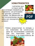 micronutrientesymacronutrientes-130331135512-phpapp02.pptx