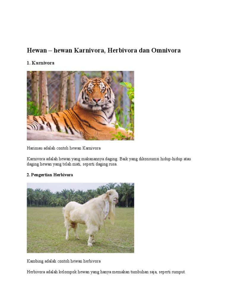 87 Koleksi Gambar Hewan Omnivora Herbivora Karnivora Gratis Terbaik