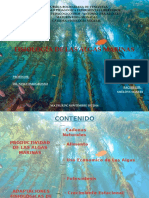 Diapositivas Fisiologia de Las Algas -