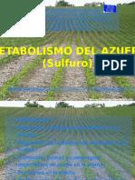 Metabolismo Del Azufre