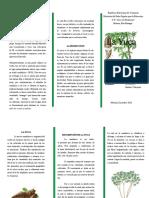 Triptico jhonker.pdf
