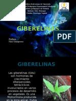Giberelinas