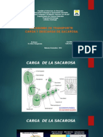 Transporte de Fotoasimilados_ Carga y Descarga de Sacarosa (2)