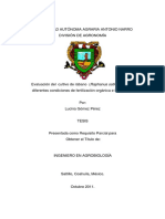 rabanito tesis.pdf