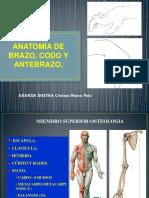 Anatomia de Brazo Codo y Antebrazo Curso Verano 2014