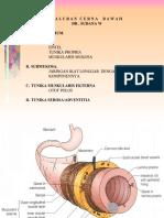 10833839-Sistem-Pencernaan-1.ppt