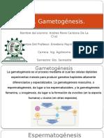 GametoGenesis