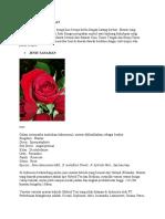 Sejarah Singkat Tanaman Mawar