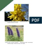 beschrijving bloemen