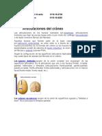 Articulaciones y Musculos Del Craneo