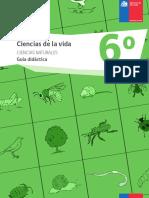 guia6basicocienciasdelavidacnaturales.pdf