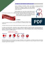 Conceptos Básicos Del Sistema Cardiovascular