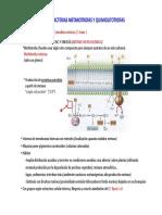 TEMA 5. Proteobacterias Metanotrofas y Quimiolitotrofas