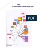 TEMA 13. Phyla Chlamidia, Deinococcus-Thermus, Bacteroidetes-Flavobacteria-Cytophaga, Aquifex