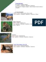 Animales Savajes de Bolivia