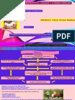 FASE 3 diagnostico causas y consecuencias.pptx