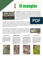 manglar.pdf