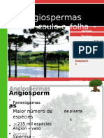 V 4angiospermas Raizcauleefolha 110814212138 Phpapp01