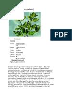 Apium graveolens.doc