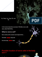 nerve cell - cell project