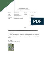 Alat Dan Mesin Pertanian (Laporan Tetap Praktikum Dasar- dasar Agronomi) Febri Irawan 05091002006 Teknik Pertanian UNSRI