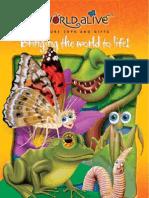 Catalogo insectos
