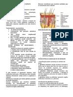 RESUMO DE HISTOLOGIA.pdf